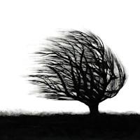 Treestyle